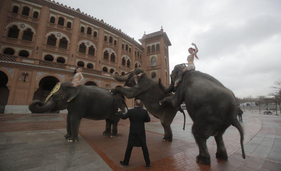 Los elefantes del Gran Circo Mundial actúan durante su paseo en la explanada anexa a la plaza de Las Ventas.