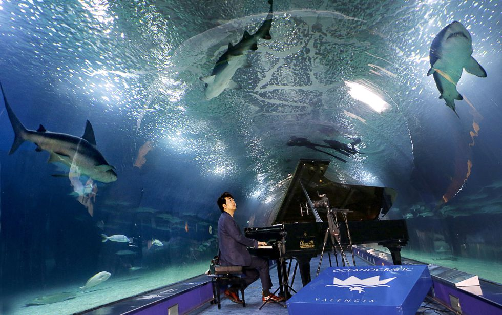 El pianista Lang Lang en el túnel de los tiburones del Oceanogràfic de Valencia.