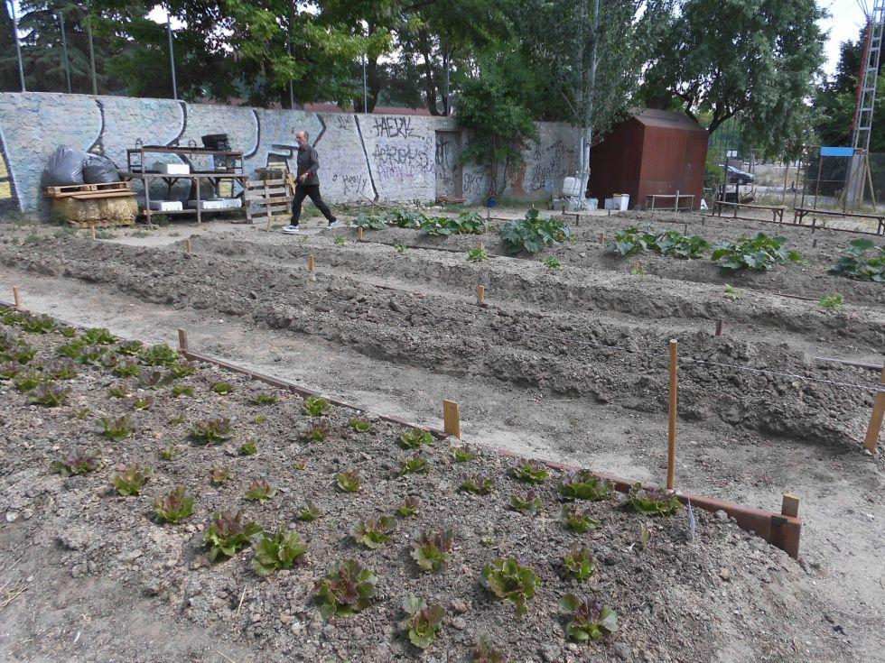 El huerto urbano de Alameda de Osuna, que participa en esta iniciativa.