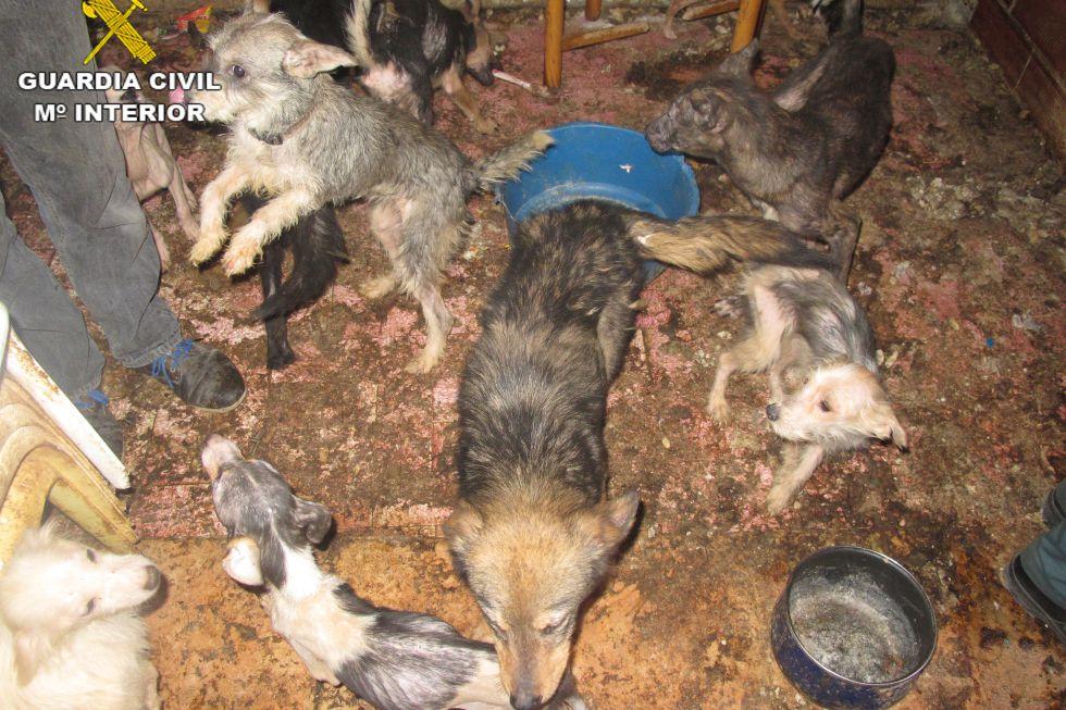 Algunos de los perros hacinados en la vivienda de Benaguasil.