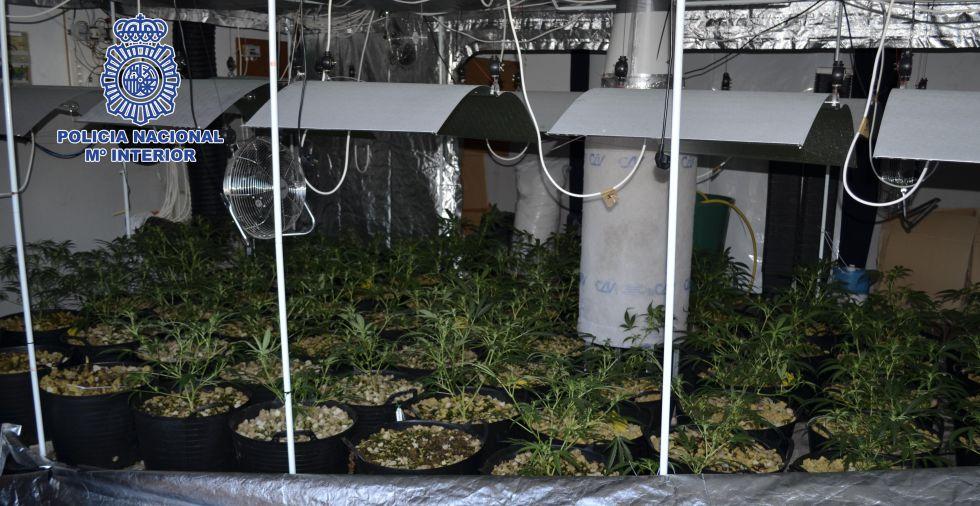 Una de las plantaciones de marihuana identificada por la policía española.