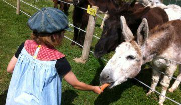 Una niña alimenta a uno de los animales de Burrolandia.