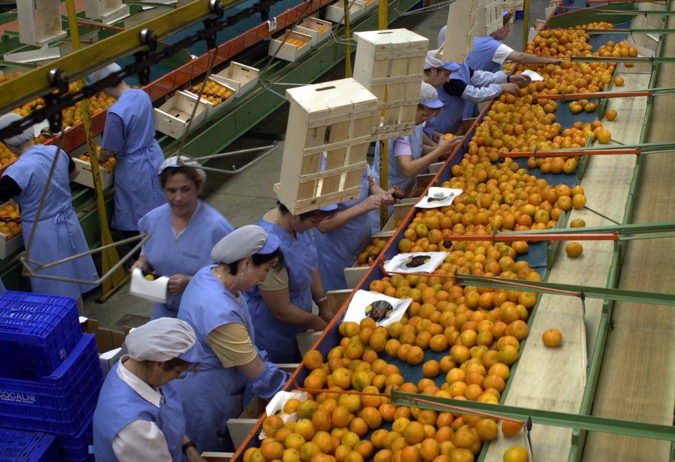 Empleadas de una empresa de manipulación de frutas.