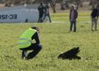 Un buitre, posible causa del accidente de la avioneta de Perales