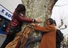 Vecinos de Cadaqués impiden la tala de plátanos centenarios