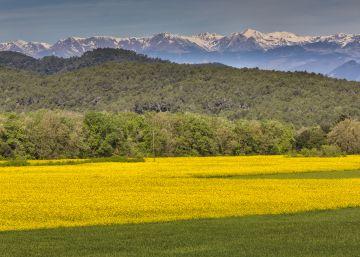 Las subvenciones agrarias tiñen Cataluña de amarillo