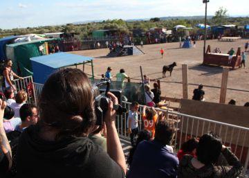 Los 'correbous' regresan sin incidentes a las Tierras del Ebro