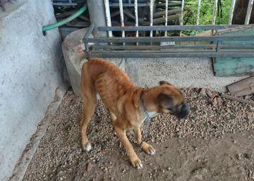 Denuncias vecinales destapan otros casos de maltrato animal