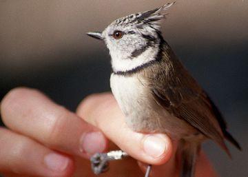 Polluelos y poetas en los bosques