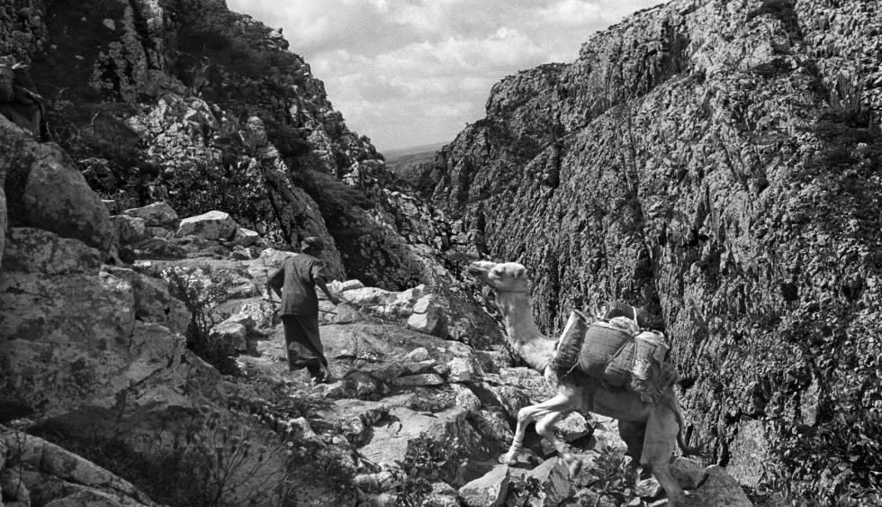 Un hombre tira de un camello en las montañas de Socotra, en el filme.