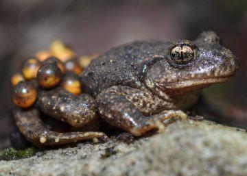 Peñalara, el refugio de los anfibios