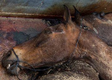 El defensor abre una queja a la Junta por el maltrato animal en El Rocío