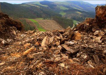 Las plantaciones de eucaliptos engullen 40 yacimientos arqueológicos en Galicia
