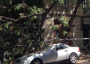 Un árbol cae sobre un coche en Valencia tras las altas temperaturas