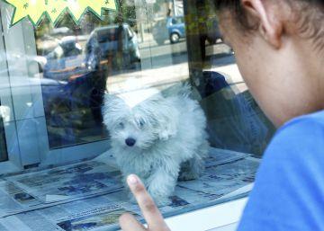 La Asamblea prohibirá a las tiendas tener perros y gatos expuestos al público