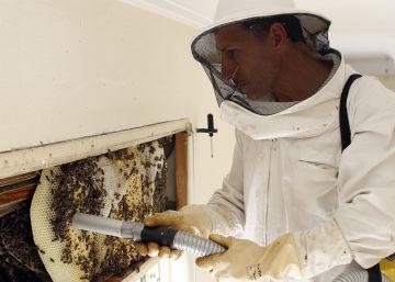 El rescatador de abejas