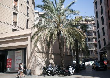 Histeria bajo las palmeras