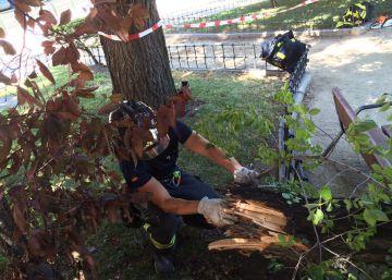 Un hombre de 58 años muere al caerle una rama en Moratalaz