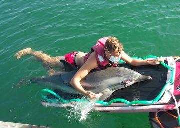 Muere el delfín rescatado en una playa de Valencia