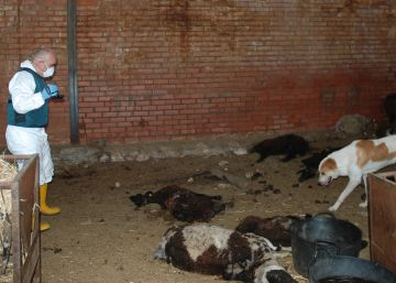 Investigado el dueño de una explotación ganadera que abandonó a sus animales