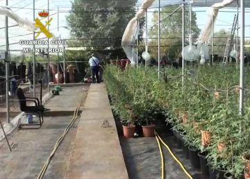 Un antiguo vivero acoge una plantación de marihuana