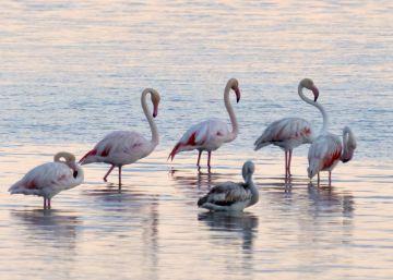 El Delta del Ebro: de 315.000 a 244.000 pájaros
