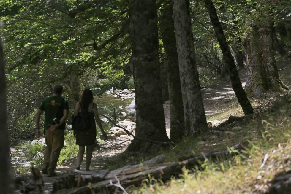 El hayedo de Montejo de la Sierra ocupa 222 hectáreas.