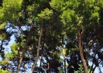 El olivo rodada en san mateu castell n for Cabanas en los arboles comunidad valenciana