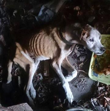 Imagen de 'Vali' tomada por la persona que lo encontró abandonado e intentó sin éxito darle alimento.