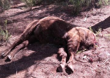 Valencia bison starved to death before being decapitated
