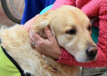 El Hospital de Torrejón reduce un 60% la medicación por depresión gracias a la terapia con animales
