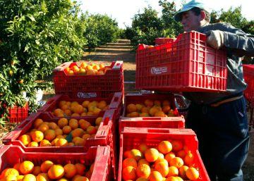 El futuro de la naranja