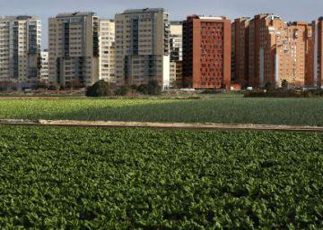 Valencia será en 2017 el centro del debate mundial sobre la alimentación en las ciudades