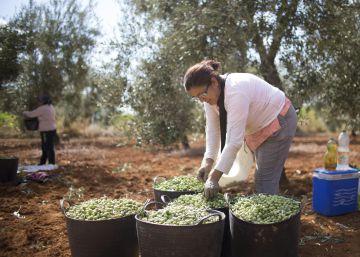 Los agricultores andaluces apoyan el anteproyecto de ley para el sector