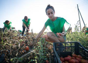 De la tierra a Internet: iniciativas para reducir el desperdicio alimentario