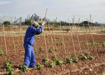 La Sierra Norte cultivará 18 variedades de judías recuperadas por la Comunidad