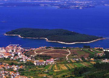 Jabalíes de mar en la isla desierta