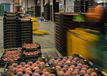 Los agricultores acuden a Asia para sortear el veto ruso a sus productos