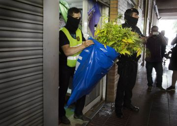 El crimen organizado se vuelca en la marihuana