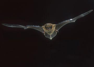 Murciélagos y reciclaje en Halloween