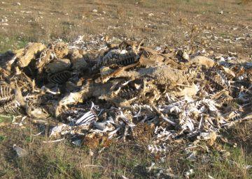 Denunciada una granja por dejar sin comida a cientos de animales