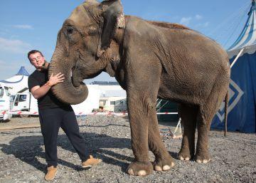 40 municipios madrileños se han declarado libres de circos con animales