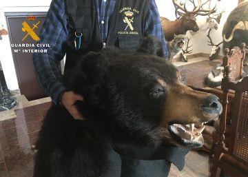 Cuatro detenidos por robar cabezas de oso y colmillos de elefante