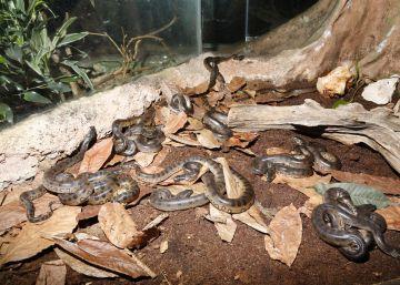 El día de la Anaconda