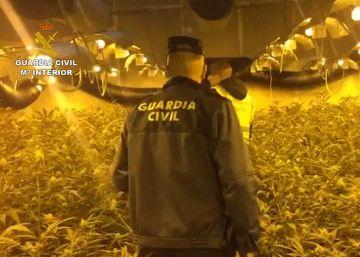 Desarticulado un grupo de ciudadanos chinos dedicados al cultivo de marihuana
