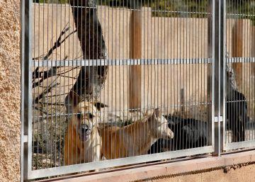 Los colectivos animalistas declaran la guerra a la protectora de Alicante