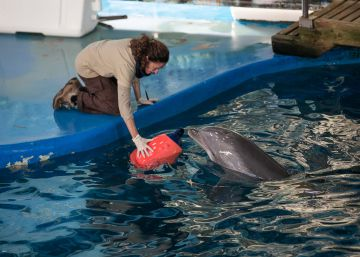 Colau 'jubila' a los delfines