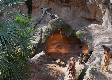 El Zoo también sube la calefacción