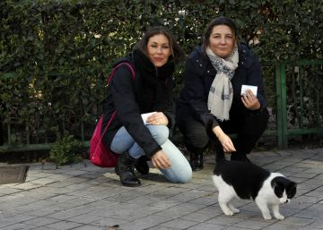 License to feed: Madrid's new scheme for dealing with feral cats