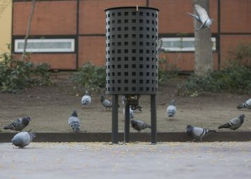 Barcelona to feed pigeons contraceptives in bid to slash numbers